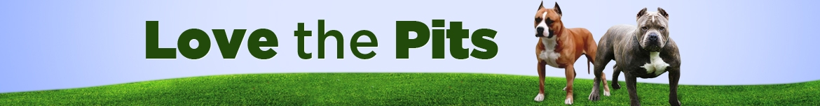 About Pit Bulls